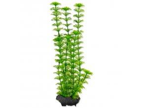 Rostlina TETRA Ambulia M