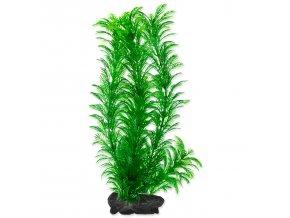 Rostlina TETRA Green Cabomba L