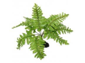 Rostlina REPTI PLANET kapradí Nephrolepis 20 cm