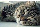 Senioři a kastrované kočky
