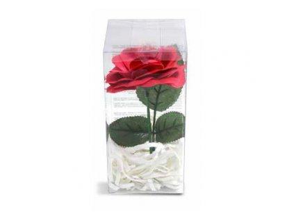 Mýdlová růže Pokhara