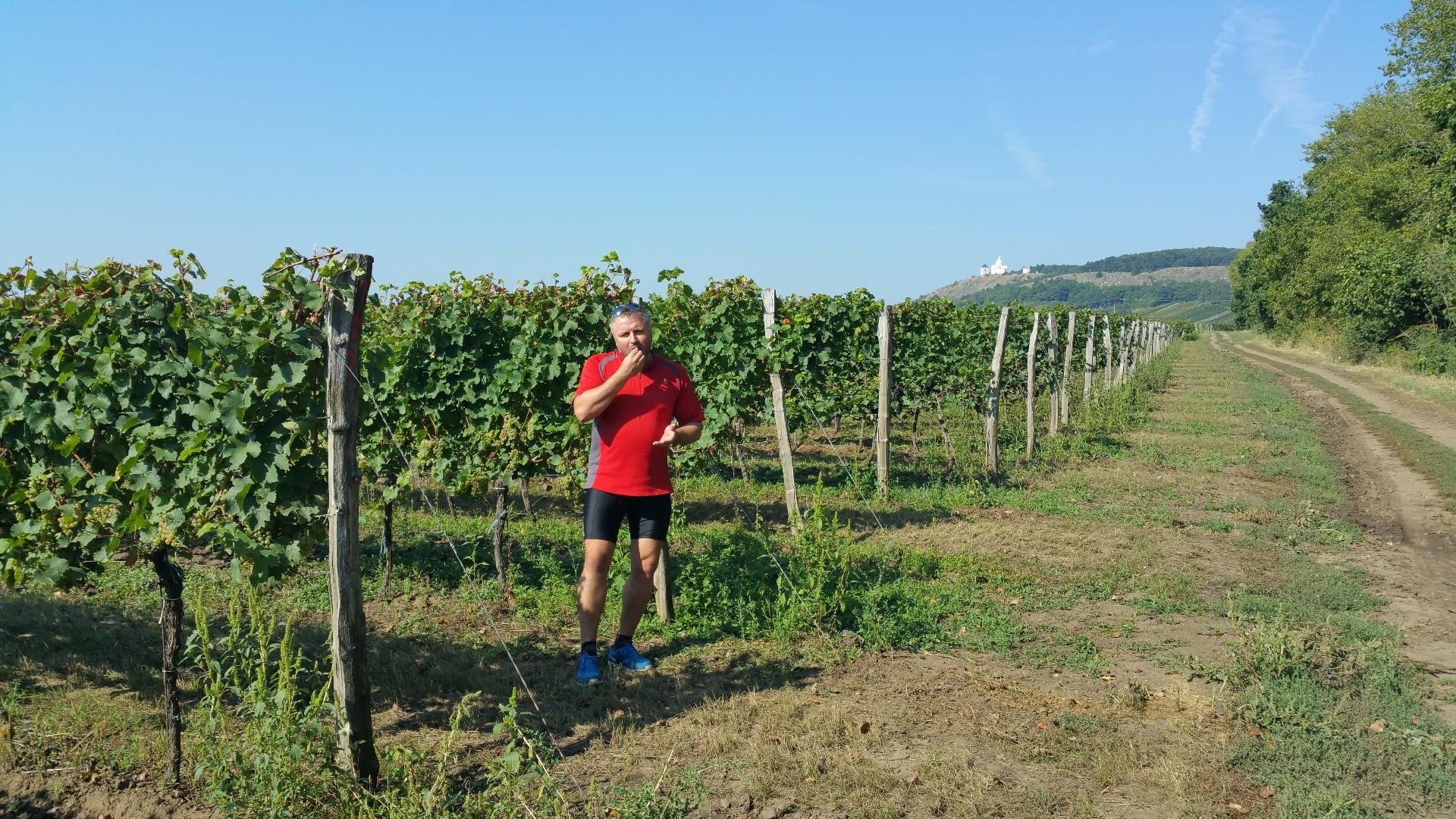 Míra Kapoun na vinici pod Svatým kopečkem