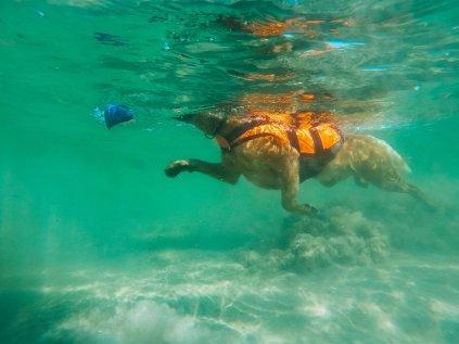 safe life jacket orange 1