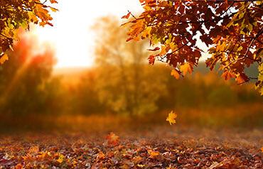Zažeňte podzimní splín s malováním podle čísel