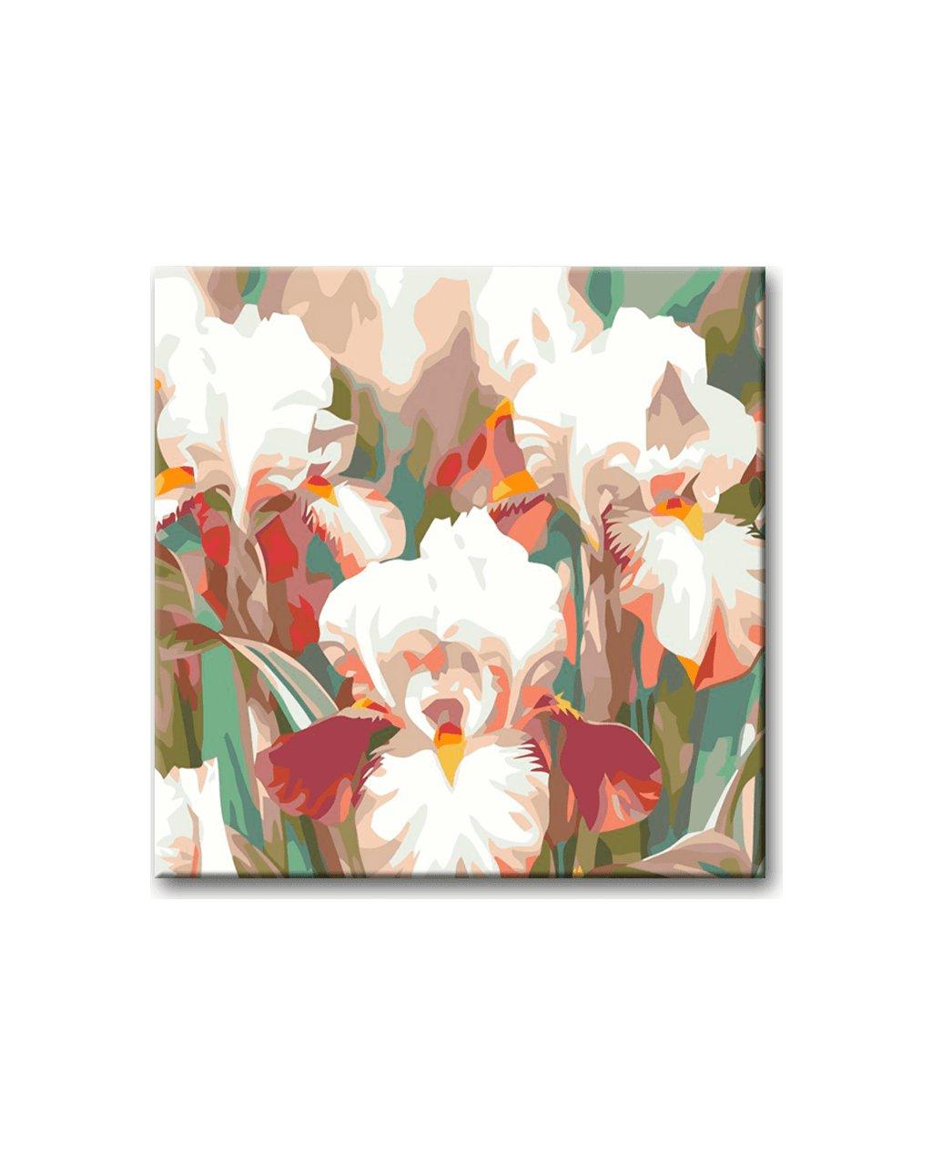 Růžovo bílé kosatce