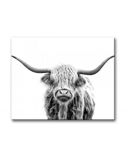 Malování podle čísel - Highland