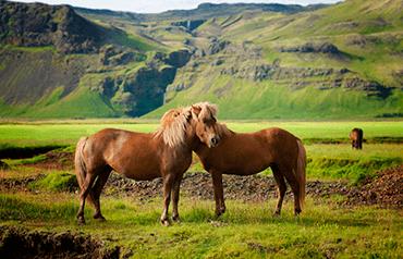 Świętuj swoją miłość do zwierząt. Międzynarodowy Dzień Konia się zbliża