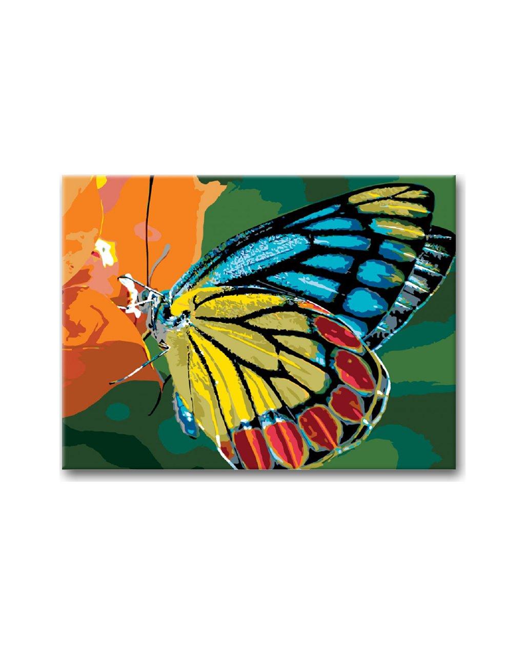 Malowanie po numerach – Barwny motyl