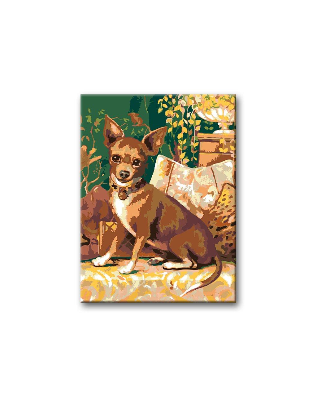 Malowanie po numerach – Chihuahua na kanapie