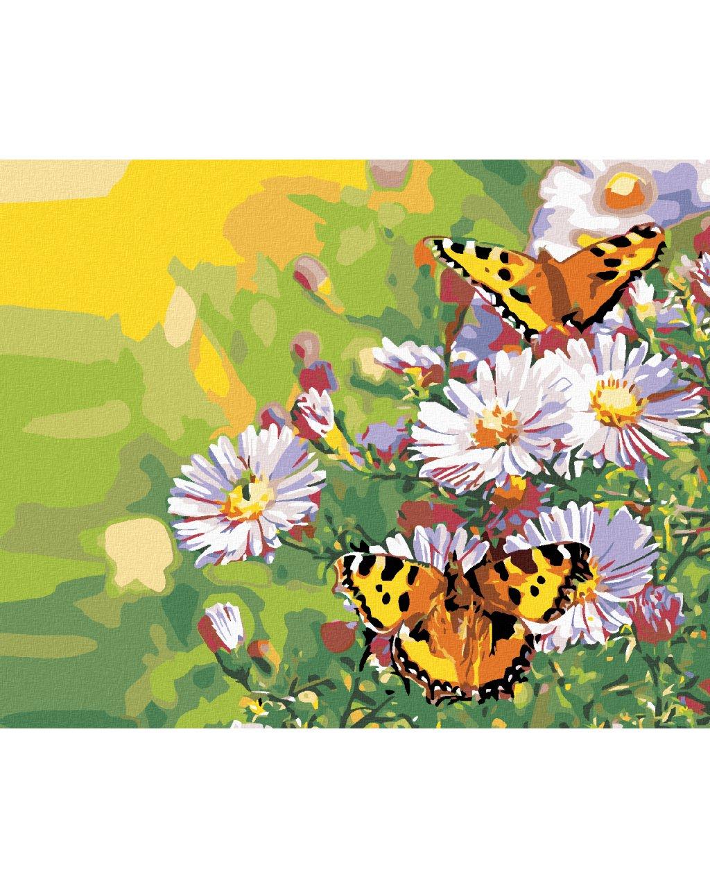 Malowanie po numerach – Motyle na stokrotkach