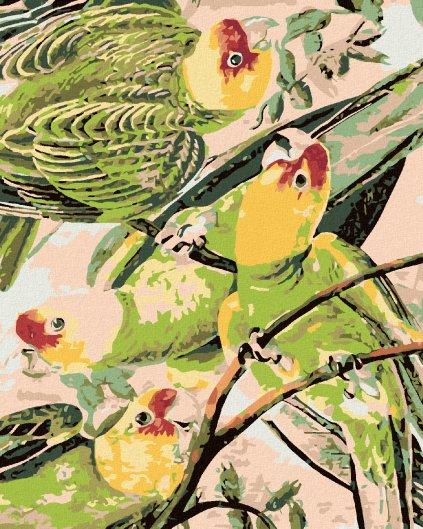 Malowanie po numerach – Wesołe papugi