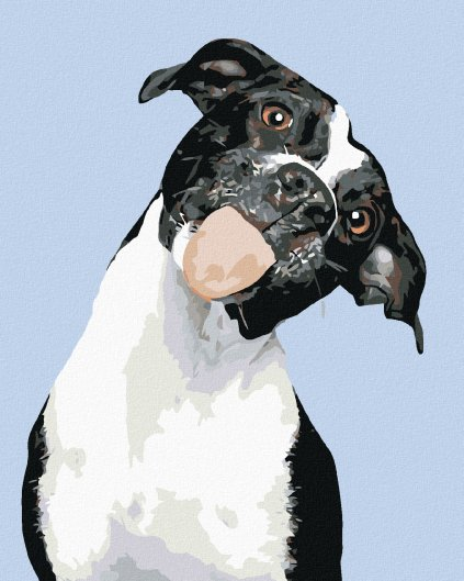 Malowanie po numerach – Czarno-białe psisko