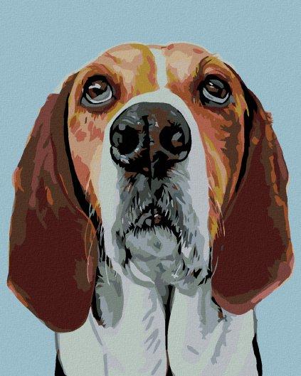 Malowanie po numerach – Pies Beagle