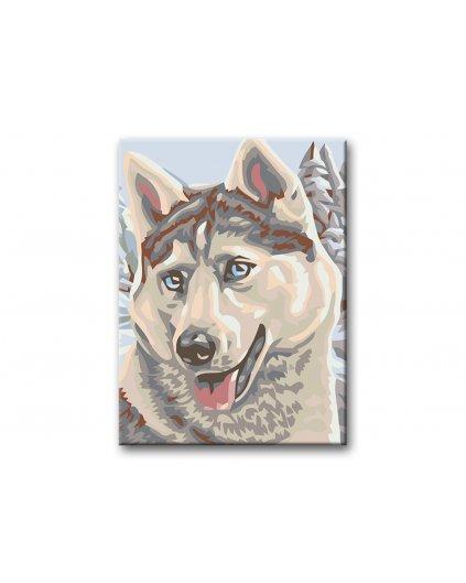 Malowanie po numerach - Husky syberyjski na śniegu