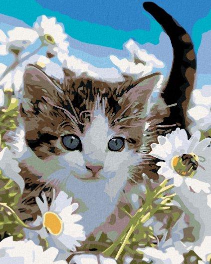 Malowanie po numerach – Kocie w margaretkach