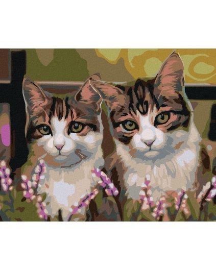 Malowanie po numerach – Kot w trawie