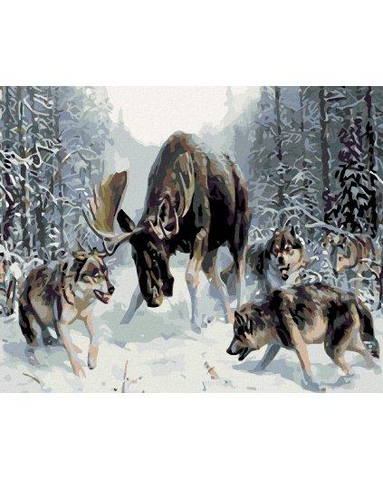 Malowanie po numerach - Łoś z wilkami na śniegu
