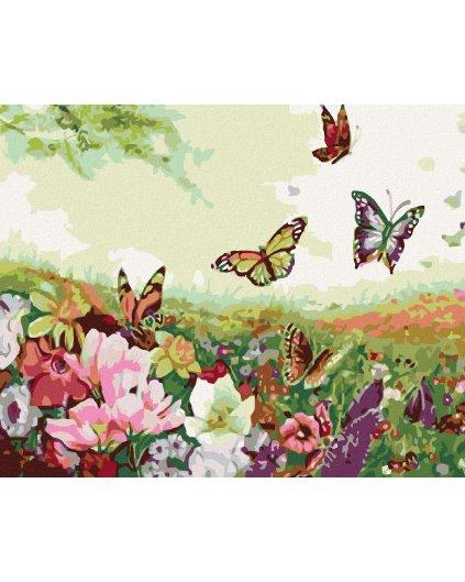 Malowanie po numerach - Pole motyli