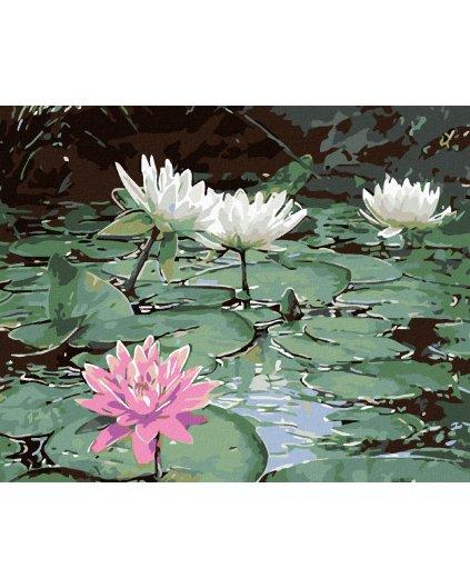Malowanie po numerach - Lilie wodne