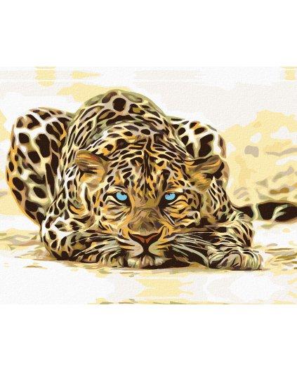 Malowanie po numerach – Czający się leopard