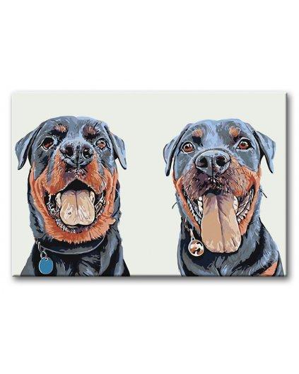 Malowanie po numerach – Dwa rottweilery