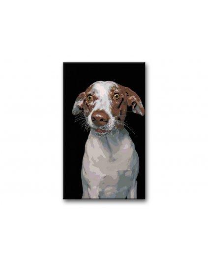 Malowanie po numerach – Zdziwiony pies na czarnym tle