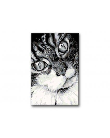Malowanie po numerach – Kocie spojrzenie