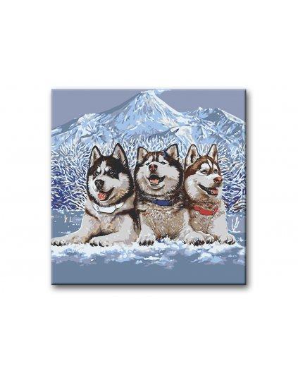 Malowanie po numerach – Trio husky