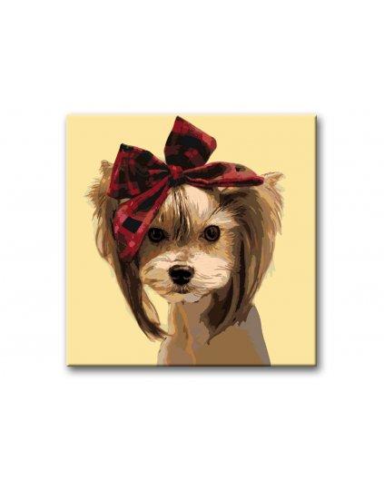 Malowanie po numerach - Yorkshire terrier