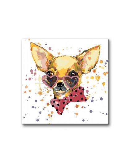 Malowanie po numerach - Chihuahua
