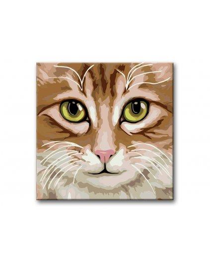 Malowanie po numerach – Jasnobrązowy kot