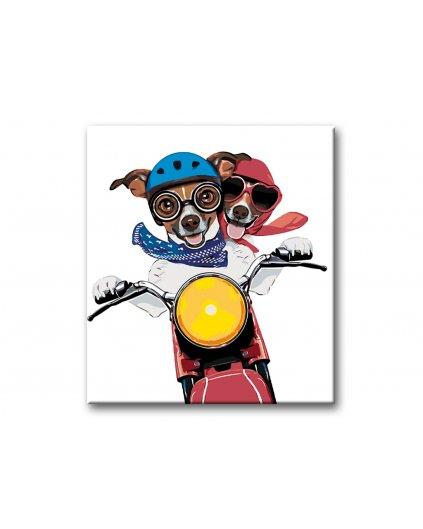 Malowanie po numerach - Jack Russell na motocyklu