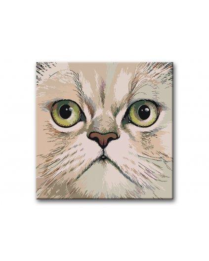 Malowanie po numerach – Kot perski