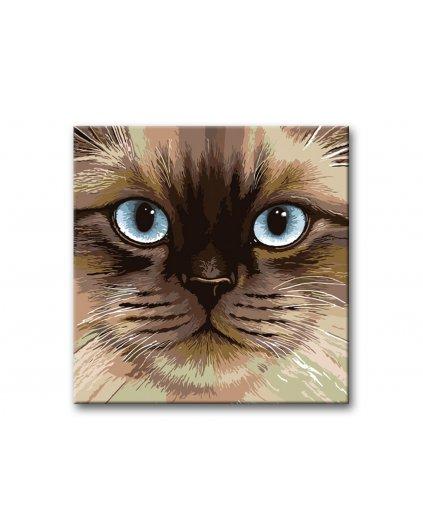 Malowanie po numerach – Niebieskooki perski kot