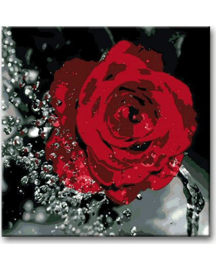 Malowanie po numerach – Róża i krople wody