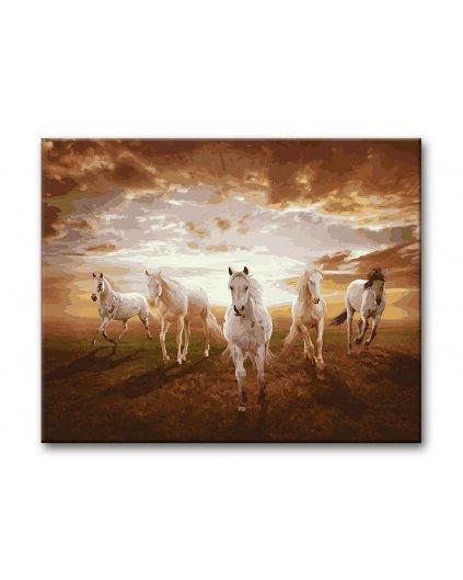 Malowanie po numerach – Białe konie w biegu