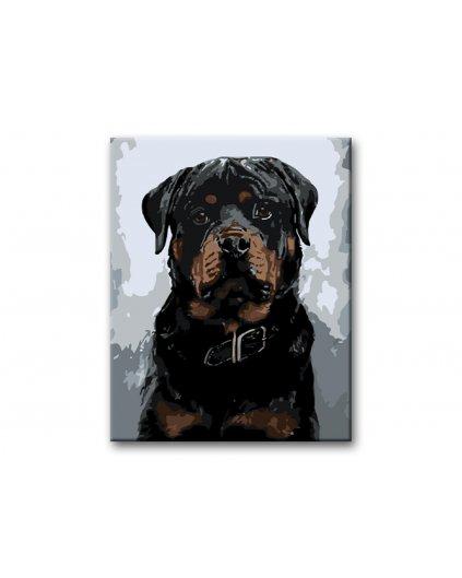 Malowanie po numerach - Duży czarny rottweiler