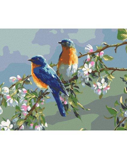 Malowanie po numerach – Ptaki