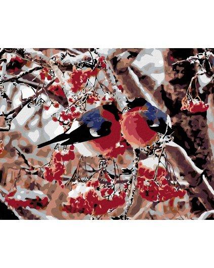 Malowanie po numerach – Ptaki w jarzębinie