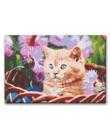Malowanie po numerach – Brązowa kotka w koszu