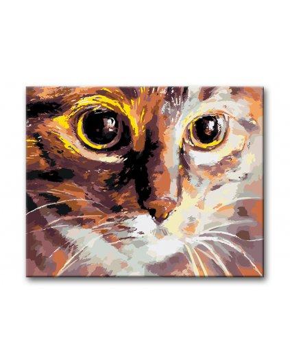 Malowanie po numerach - Kocie oczy