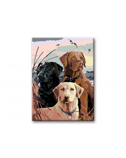 Malowanie po numerach – Labradorzy