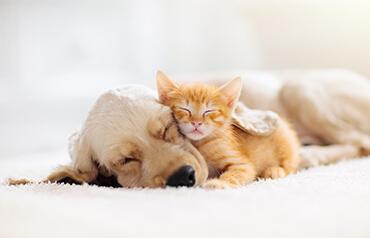 Užite si zľavy až 39% nielen na motívy so zvieratami!