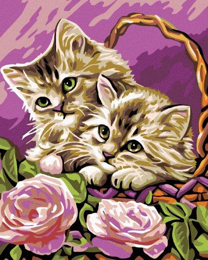 Maľovanie podľa čísel - MAČIATKA V KOŠÍKU A RUŽOVÉ RUŽE