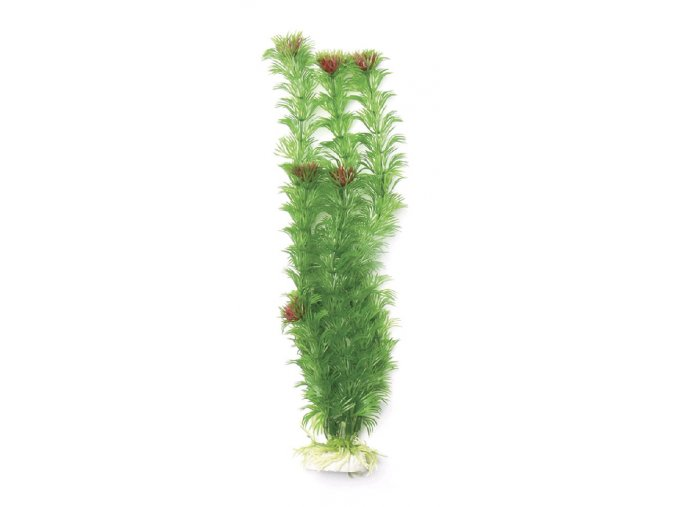 Rostlina  UH 30cm (Cabomba red)