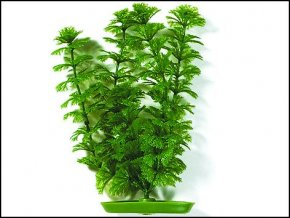 Rostlina UH 20cm (Cabomba)