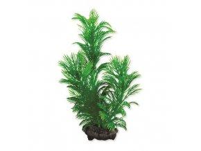 Rostlina Green Cabomba S 15cm
