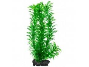 Rostlina Green Cabomba Tetra L 30cm