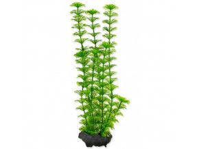 Rostlina Ambulia Tetra M 23cm