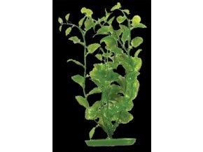 Rostlina  UH 11cm (Bacopa )